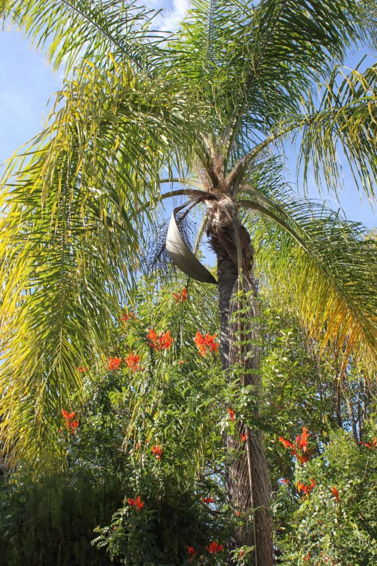 Palm tree with flowers on bottom
