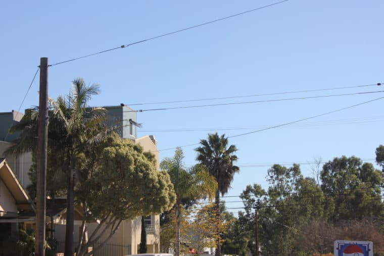 Tree lined street with power poles