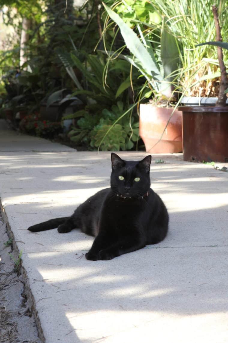 Black cat laying on side walk
