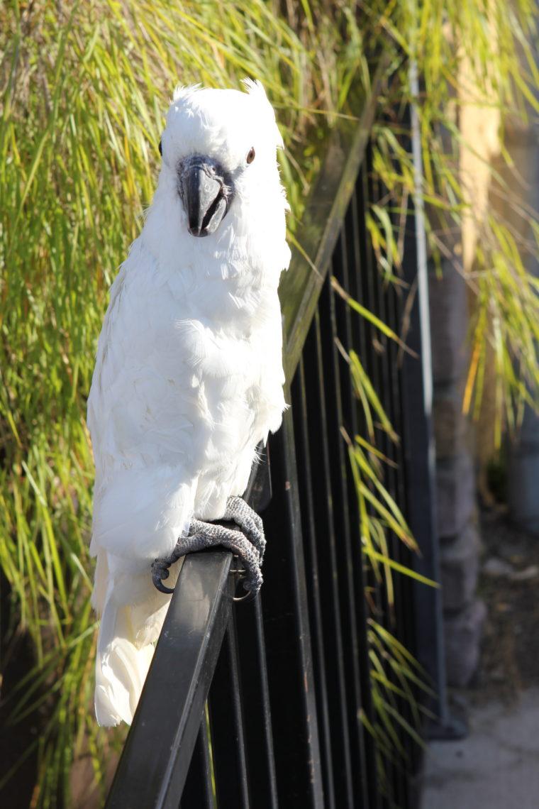Large white bird on fence