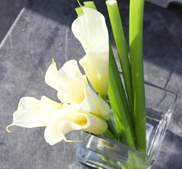 white Calla lilies in glass