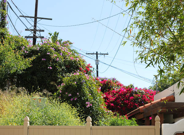 Large bushes and pink flowers