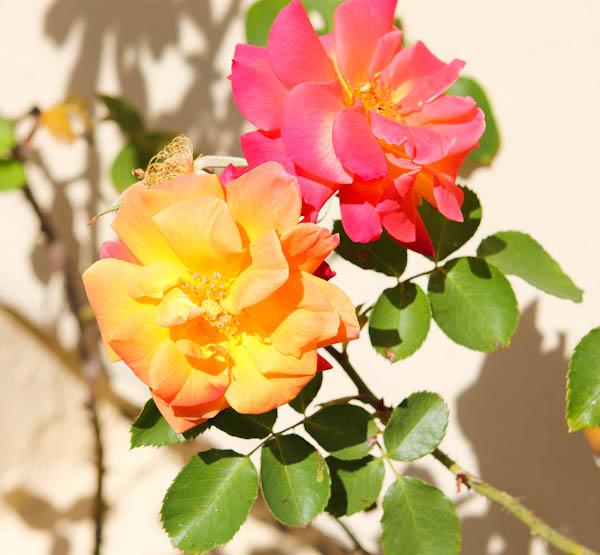 Orange and pink flowers