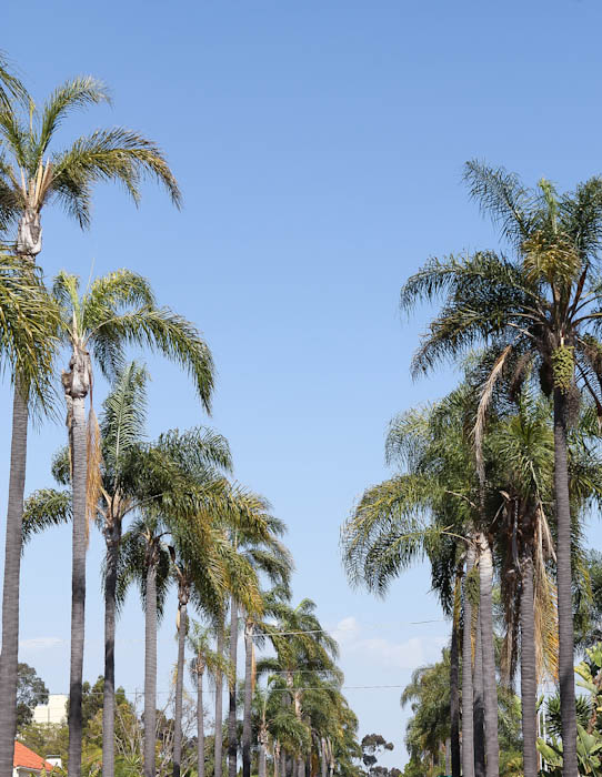 Street lined with palm trees