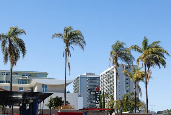 High Rise buildings with palm trees