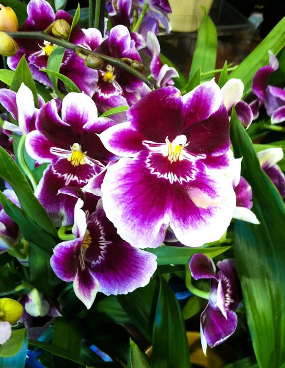 orchids-4