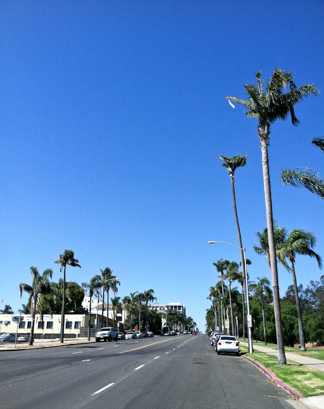 San Diego road with palm trees and blue sky