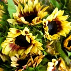 sunflowers-14
