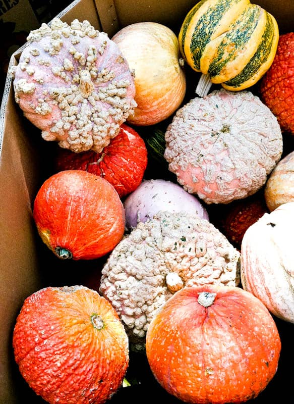 Box of green, red, white pumpkins