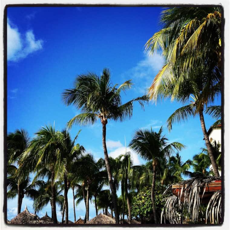 Aruba palm trees and sky