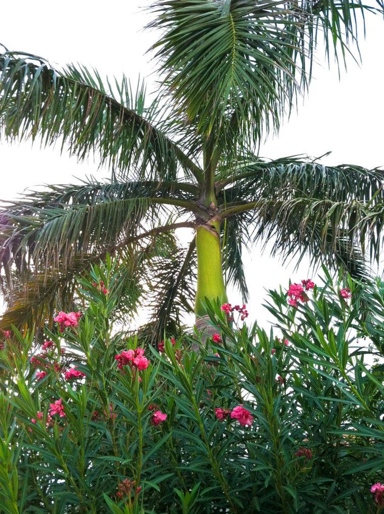 Aruba greenery with flowers