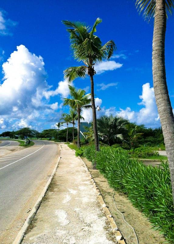 Aruba path with palm trees