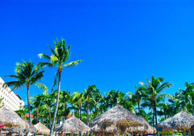 Palm trees and blue sky