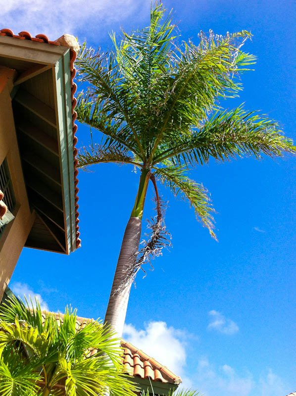 Blue Sky with Palm tree