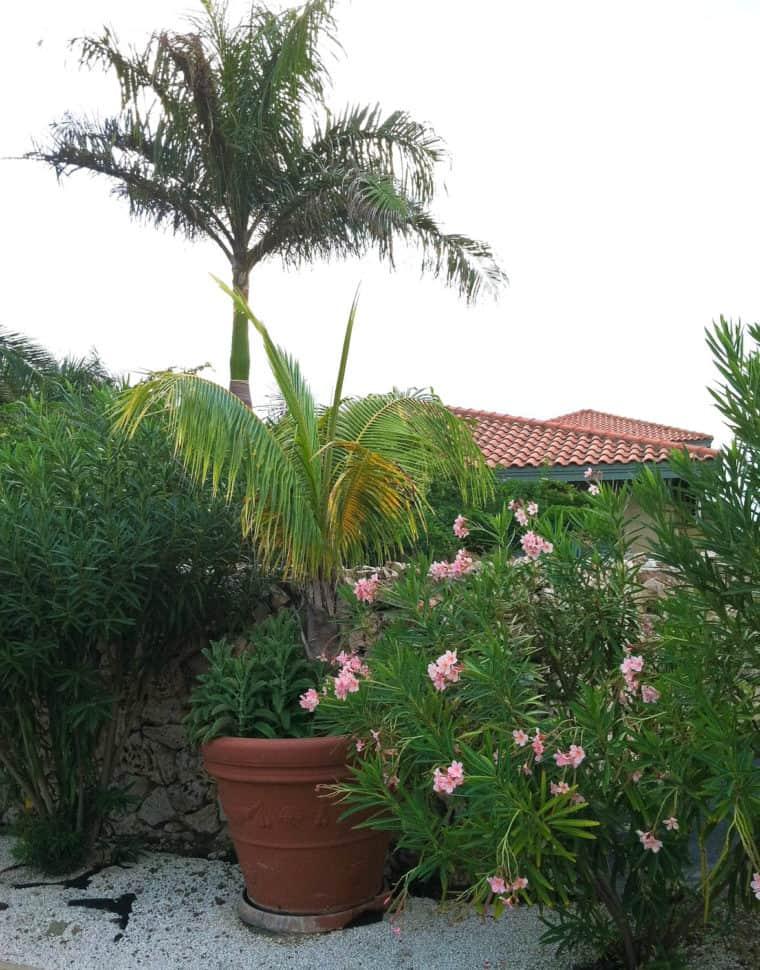 Aruba greenery and flowers