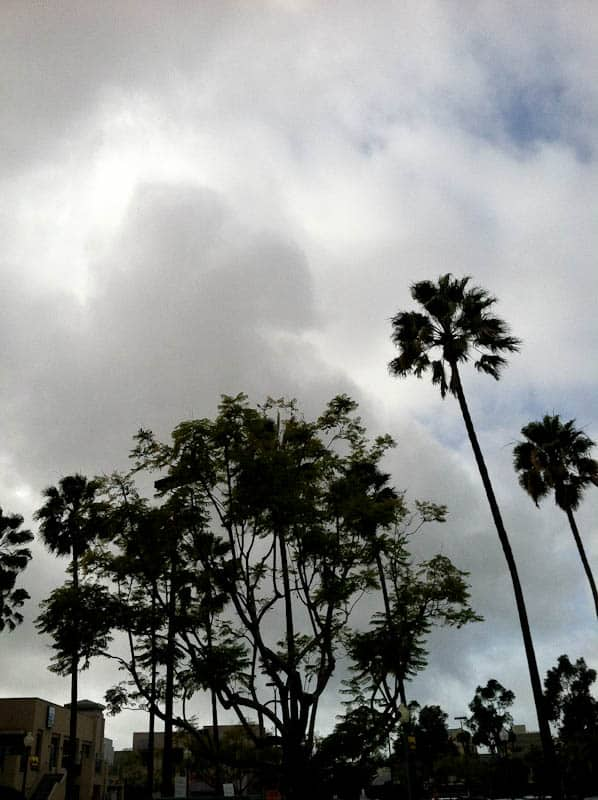 Overcast sky and palm trees