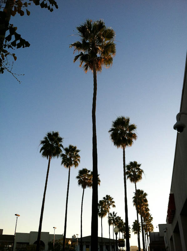 Sky and palm trees