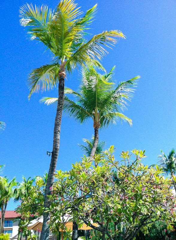 Clear skies and palm trees