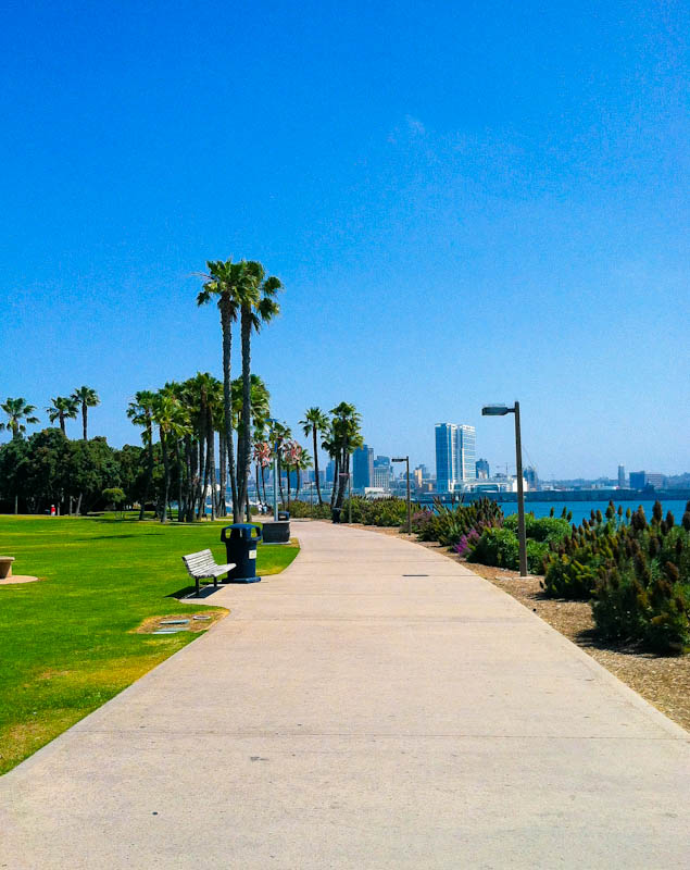 Coronado island path with grass and palm trees